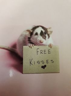 Rats are very smart, can be litter trained and very affectionate. Cute Little Animals, Cute Funny Animals, Animals And Pets, Baby Animals, Strange Animals, Rats Mignon, Dumbo Rat, Fancy Rat, Cute Rats