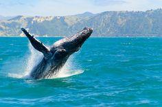 The Hermanus Whale Festival, Cape Town. http://worldofexpats.com/destination/overview/South-Africa