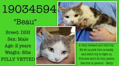 """CURRENT KNOWN STATUS: Must be tagged for rescue or adoption by 7am on 02/08/13**  """"Beau""""  Animal ID: 19034594  Breed: DSH  Sex: Male  Age: 2 years  Weight: 8lbs  FULLY VETTEDThis sweet boy is in Texas and only has until 7 a.m. Friday morning. Please share and visit his thread to tag others!!  Located in Fort Worth, TX, Fort Worth Animal Care and Control"""