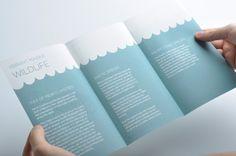 Marine Life Pamphlets on Behance