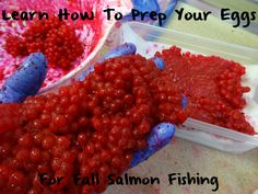 Learn How to Prep Eggs For Fall Salmon