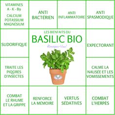 Les Bienfaits du Basilic | LE BASILIC Le Monde s'Eveille Grâce à Nous Tous ♥ Sante Bio, Nutrition Sportive, Herb Seeds, Sports Nutrition, Medicinal Plants, Herbal Medicine, Health Diet, Healthy Smoothies, Raw Food Recipes