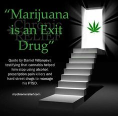 """Marijuana is an Exit Drug."" Quote by Daniel Villanueva testifying that cannabis helped him stop using alcohol, prescription pain killers and hard street drugs. Pms, Drug Quotes, Asshole Quotes, Stoner Quotes, Weed Quotes, La Confidential, Marijuana Facts, Endocannabinoid System, Alzheimer"