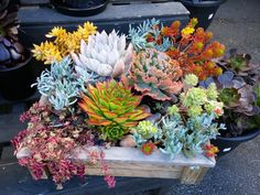 Nice succulent arrangement by Cherry Ong