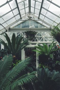 Volunteer Park Conservatory // somesaltwater.wordpress.com