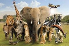 ANIMAL POSTER ~ AFRICA SAVANNAH 24x36 Animals Lion Zebra Tiger Giraffe