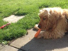 Terry Dresbach @draiochta14  Don't touch my carrot!