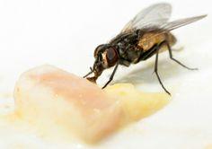 house fly control advice