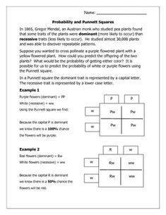 Short introduction to probability and Punnett squares with one practice sheet and one blank practice sheet.