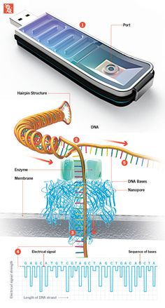 Soon anyone with $1000 and a computer can sequence DNA with the new Fastest DNA Sequencer
