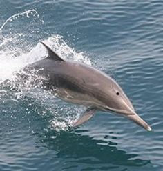 Dolphin watching in Guam. Such fun! XD Must do.