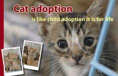 Cat adoption is like child adoption it is for life! #adoption