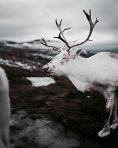 Mundilfari | The North Realm