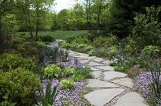 A gently curved flagstone path draws pedestrians from the front yard, through the spacious side garden, toward the rolling lawn in the distance. This side garden offers plenty of beautiful plant combinations that provide interest: flowering thyme in and around the flagstones; repeating mounds of perennials (irises and lady's mantle); & soft shrubs (azaleas) complement the traditional landscape by Statile & Todd