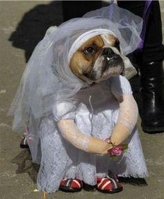 Get Puppy Insurance