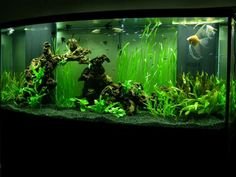 unusual aquariums | ... underwater vegetation gives this modern fish tank a unique appeal