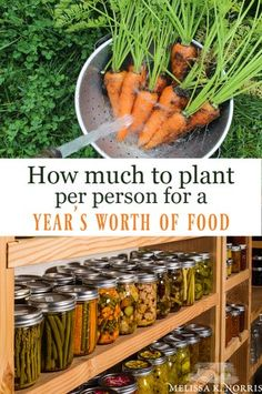 How Much to Plant Per Person for a Year's Worth of Food - Garden Care, Garden Design and Gardening Supplies Garden Types, Organic Vegetables, Growing Vegetables, Vegetables Garden, Organic Fruit, Store Vegetables, When To Plant Vegetables, Veggies, Grow Organic