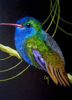 Blue-throated Golden-tailed Hummingbird; by Cyra R. Cancel