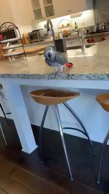 I love Always Enjoy Being Crazy Parrot Lady Super Cute Animals, Cute Little Animals, Cute Funny Animals, Funny Birds, Cute Birds, Funny Animal Memes, Funny Animal Pictures, Beautiful Birds, Animals Beautiful