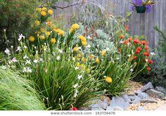 Beautiful Australian Garden Full Native Plants Stock Photo (Edit Now) 163756478 Cottage Garden Plants, Garden Shrubs, Garden Beds, Garden Grass, Rain Garden, Cottage Gardens, Glass Garden, Flowers Garden, Garden Paths