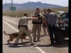 Video proof that BLM and CNN LIED about attack dogs at Bundy ranch in Nevada - YouTube