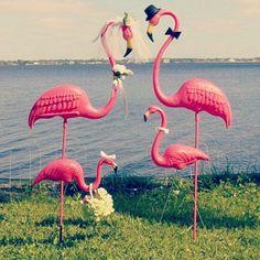 Pink flamingos Asthecurlturns.com Facebook.com/victoryroll  Doordye-sj.com
