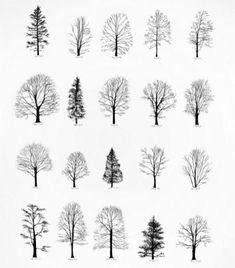 uzzīmē koku - pateikšu kāds esi.