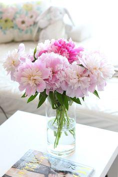 Peonies Bloom Season | ZRIVNUTRO