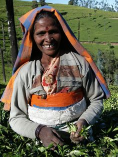 Sipping some Fair Trade Certified tea? Thank you for helping tea farmers around the world provide their children with higher education and career opportunities.