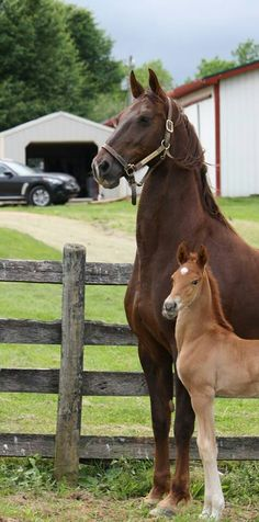 Royalty pride... My Witching Hour and Seaforth's Billion Heir foal