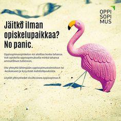 #oppisopimus #nopanic
