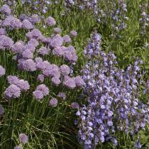Les fleurs comestibles (Dossiers)
