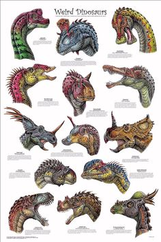 Dinosaurs with interesting faces.