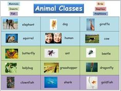 FREE animal classes reference chart. 6 photo examples for each class. Prints as two 8.5X11 sheets, assembling to an 11X17 display chart.