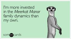 meerkat manor #RIP Flower #The Whiskers #awesome family