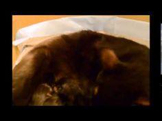 Newborn Kittens, Nova