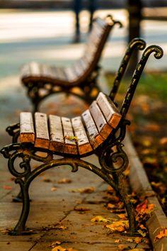 Last Golden Leaf On Bench In Autumn. by Zlatko Dimitrov on 500px