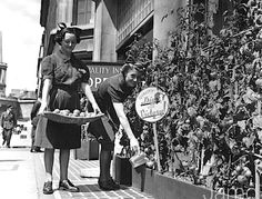 1942 – Waitresses gather tomatoes from container garden   June 19, 1942 Waitresses from the 'Quality Inn' restaurant in Regent Street, London, watering and gathering tomatoes that are growing in boxes on the pavement as part of the 'Dig for Victory' scheme.  Photo by Paget/Fox Photos/Getty Images