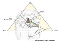 The pineal gland:  It is located in the geometric center of the brain. This correlates to the location of the Great Pyramid in the center of the physical planet.