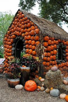 If my mother continues with her current pumpkin obsession this is what her house might look like next Fall... no joke