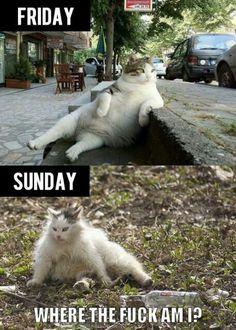 Hangover - cat edition