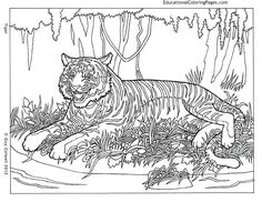 Life of Pi - Animal Coloring Pages   Educational Fun Kids Coloring