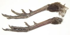Pair Of Dried Pheasant Legs With Spurs And Claws by Mother Earth, http://www.amazon.com/dp/B00DAJ5H9M/ref=cm_sw_r_pi_dp_tcqTrb18TSAB4