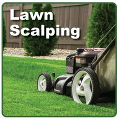 What is Scalping? Scalping is cutting your Bermuda grass shorter than last year and bagging all of the mess. While scalping is not necessary for a healthy lawn, most lawn services do it for their … Bermuda Grass, Lawn Care Tips, Pergola Pictures, Lawn Service, Yard Care, Outdoor Garden Furniture, Pergola Designs, Pool Landscaping, Lawn Mower