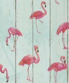 Flamingo on Wood Aqua Blue wallpaper by Albany
