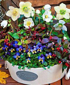Wintercombinatie planten - heeft een nieuwe #recensie op: https://www.tuincentrumoverzicht.be/product/519456/wintercombinatie-planten/recensies#recensie-513738 - @TCoverzichtBE