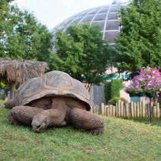 Did you know that Reptile Gardens, located six miles outside of Rapid City, has more species and subspecies of reptiles than any other wild animal park in the world? Reptile Zoo, South Dakota Travel, Wild Animal Park, Giant Tortoise, Rapid City, Exotic Birds, Plan Your Trip, Road Trips, Turtles