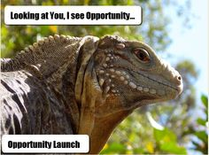 Opportunity Launch, a marketing platform that will help get more leads with their astonishing done for capture pages.Their simple compensation plan can make your businesses grow fast. You can generate income without leaving you primary business. Their unique approach to marketing that you'll get through trainings might sound weird at first ,but it is effective. Tools needed for marketing...included.