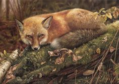 Original wildlife paintings and limited edition prints for sale by Canadian Wildlife Artist, Denis Mayer Jr. Wildlife art, commissions and prints available. Wildlife Paintings, Wildlife Art, Animal Paintings, Pastel Paintings, Realistic Paintings, Oil Paintings, Wolf, Art Fox, Canadian Wildlife