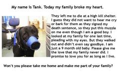 Tank - is a good dog that needs a loving family.  His family surrendered him w/a muzzle bcs they didn't want t hear him cry or bark. Pls save Tank.